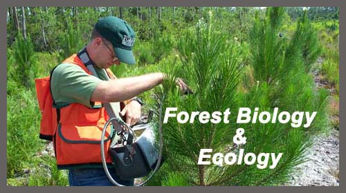 Forest Biology Ecology